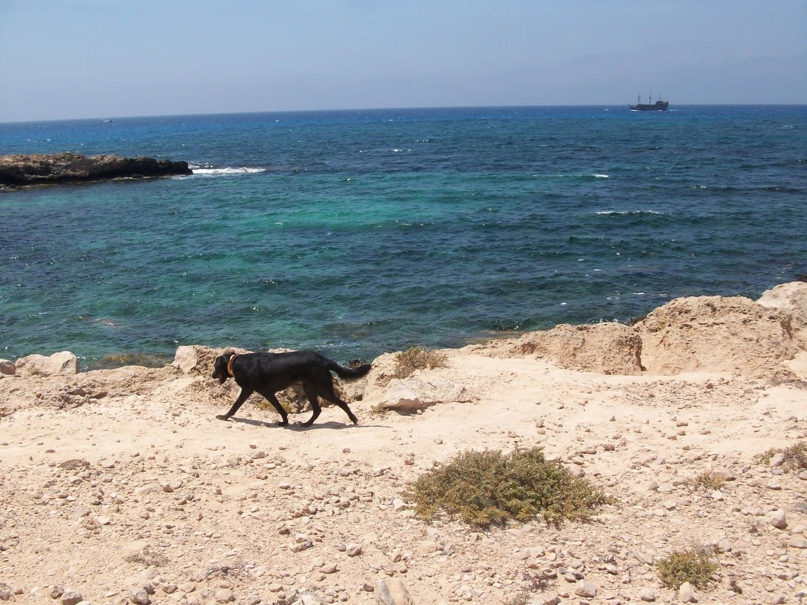 du lịch cùng chó cưng