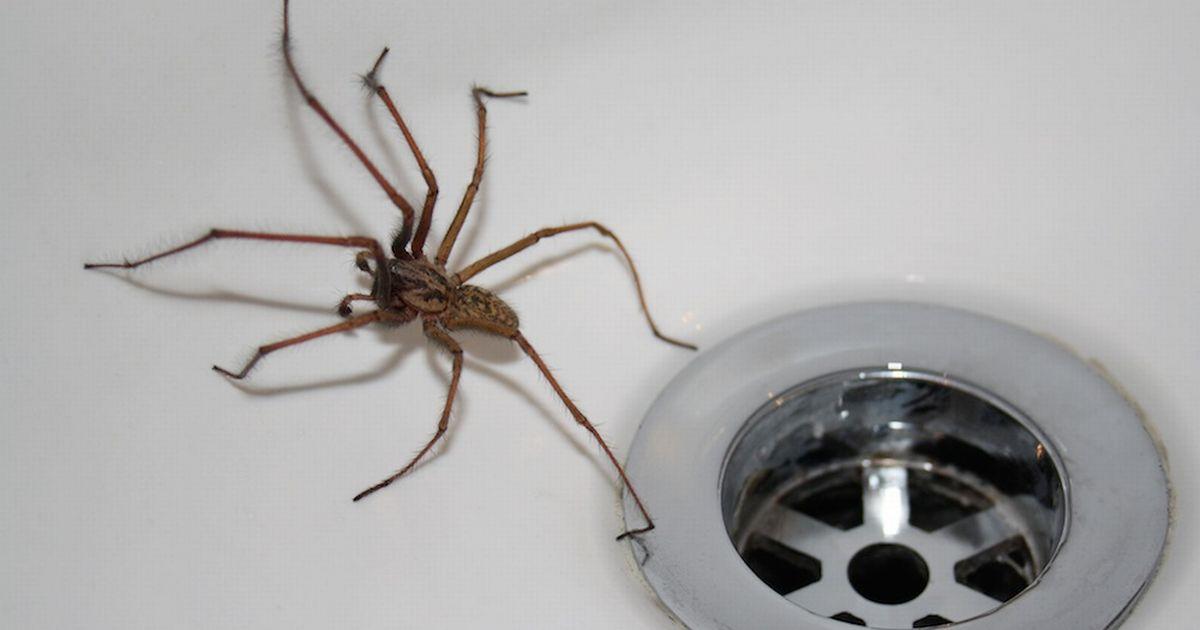 động vật hoang dã ở Úc